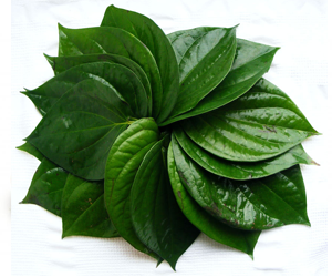 Health Benefits of Betel Leaf