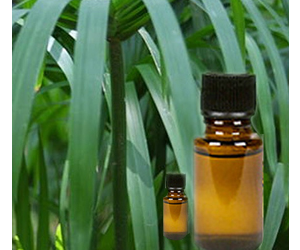 Health Benefits of Cypriol Essential Oil