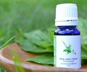 Health benefits of Tulsi (Basil) Essential Oil