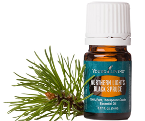 Health Benefits of Black Spruce Essential Oil