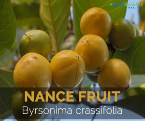 nance-fruit-byrsonima-crassifolia