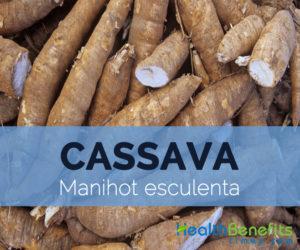 Cassava-–-Manihot-esculenta