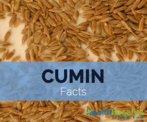 Cumin-facts