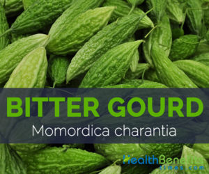 Bitter gourd - Momordica charantia