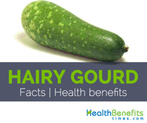Hairy Gourd Facts and Health benefits