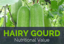 Hairy Gourd Nutritional Value