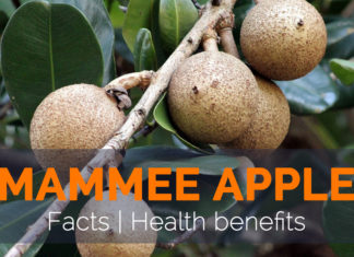 Health benefits of Mammee Apple
