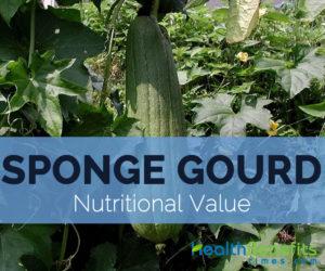 Sponge-gourd-nutritional-value