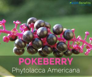 Pokeberry---Phytolacca-Americana