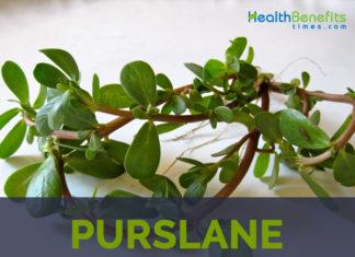 Purslane facts and health benefits