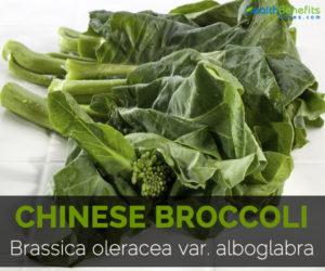 Chinese-broccoli-Brassica-oleracea-var.-alboglabra