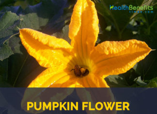 Health benefits of Pumpkin flowers