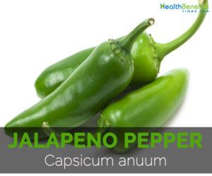 Jalapeno-pepper-Capsicum-anuum