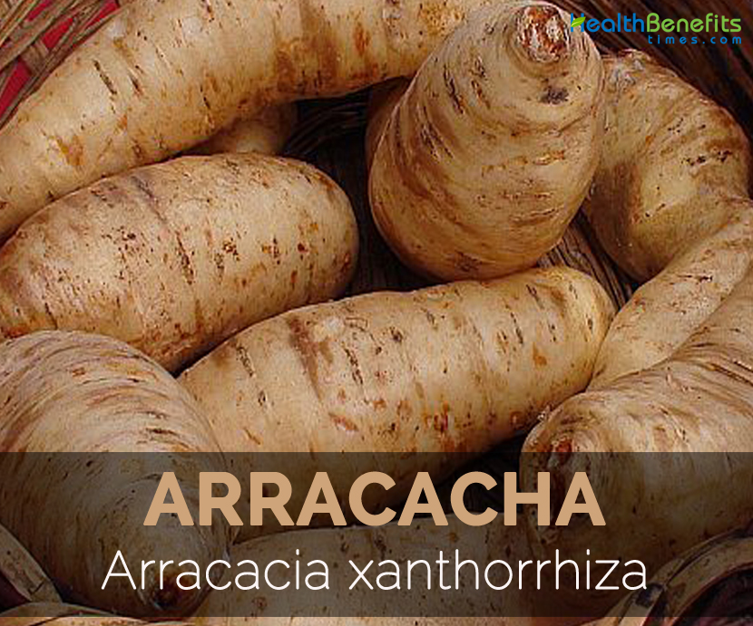 Arracacha Facts, Health Benefits and Nutritional Value