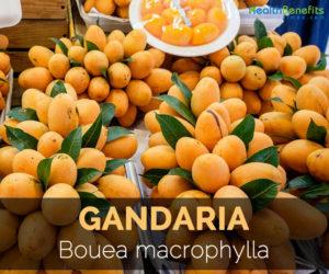 Gandaria-Bouea-macrophylla