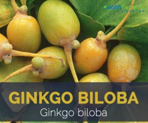 Ginkgo biloba facts and health benefits