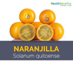 Naranjilla facts and health benefits