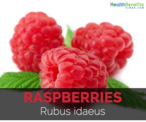 raspberries-rubus-idaeus