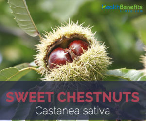 Sweet Chestnuts facts and health benefits
