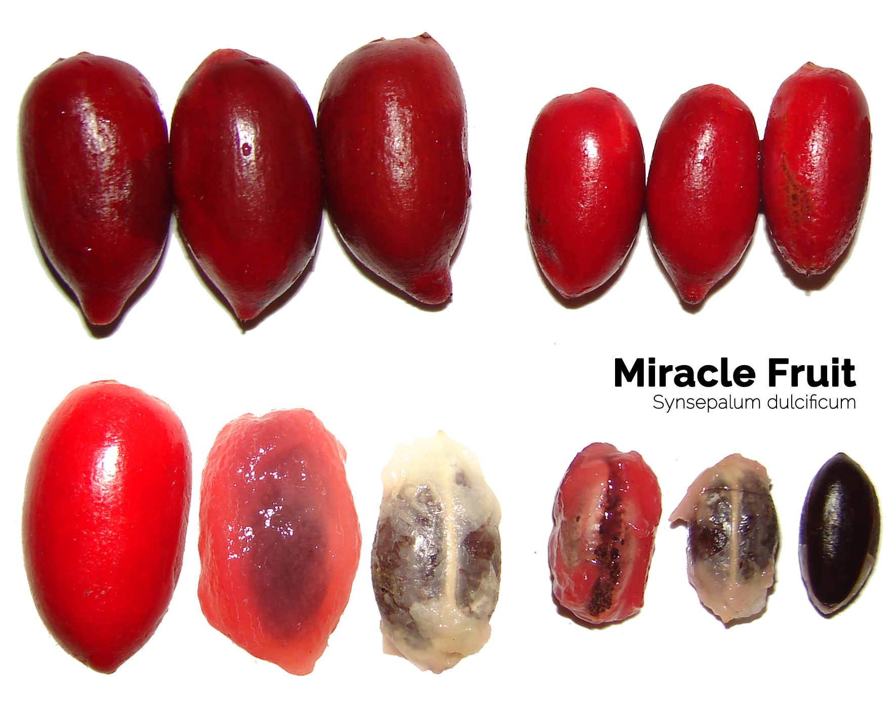 miracle-fruit-seeds
