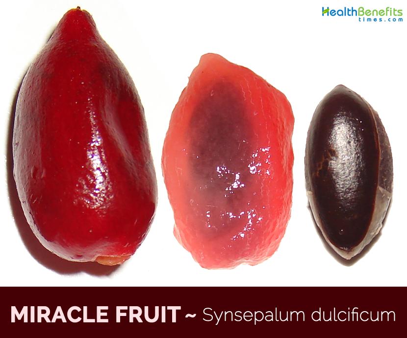 Miracle Fruit-Sysepalum ducificum