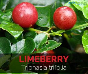 limeberry-triphasia-trifolia