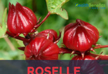Roselle facts and health benefits