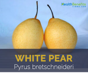 White pear facts and health benefits