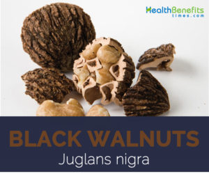 Black Walnut facts and health benefits