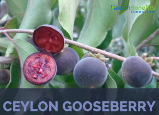 Ceylon gooseberry facts and health benefits
