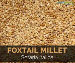 foxtail-millet-setaria-italica