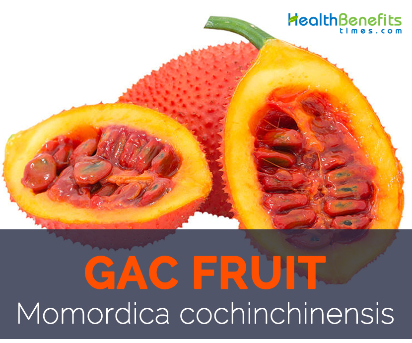 Gac fruit facts and health benefits