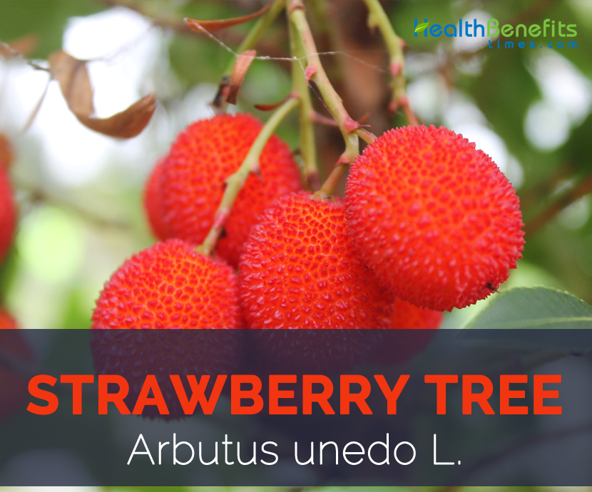 Strawberry tree facts and health benefits