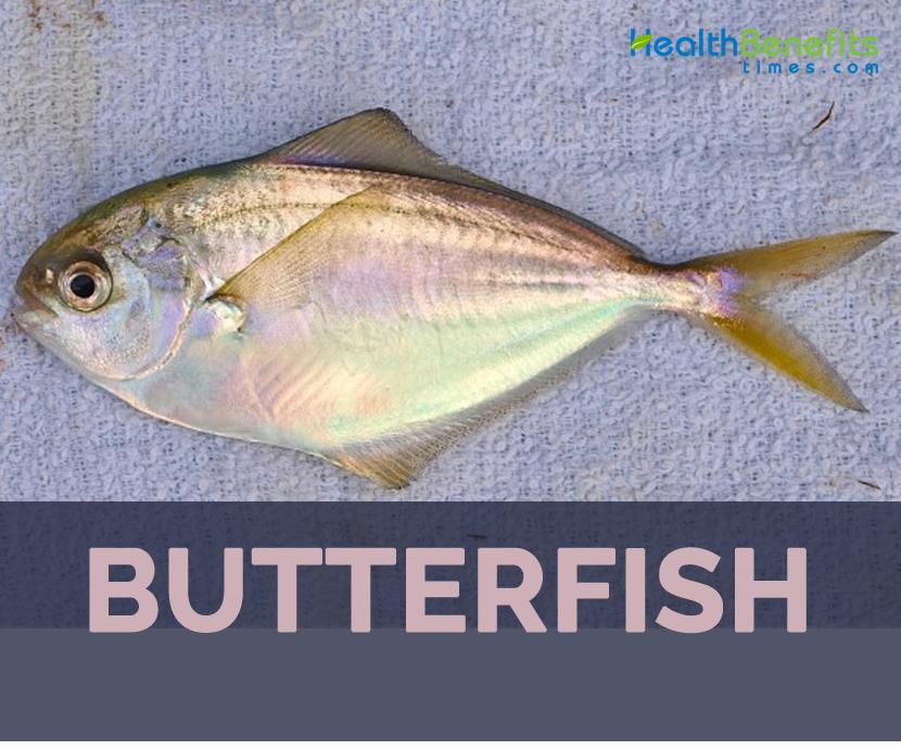 Butterfish on Irregular Shapes