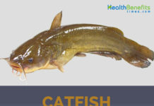 Health Benefits and facts of Catfish