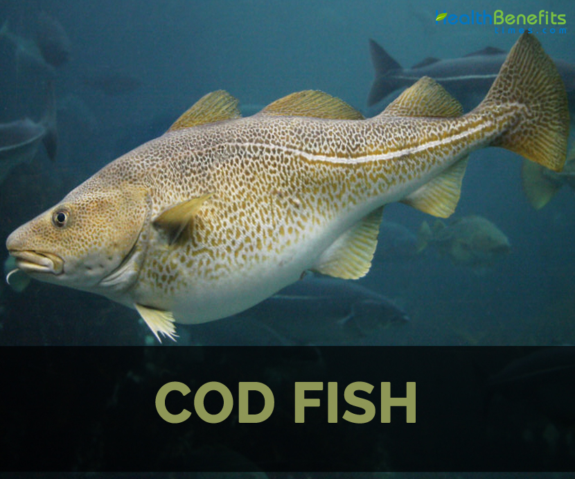 Cod fish facts health benefits and nutritional value for Image of fish
