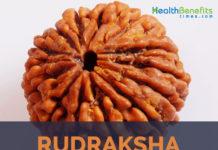 Rudraksha facts and health benefits