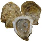Beau Soleil Oysters