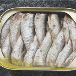 Brisling Sardine