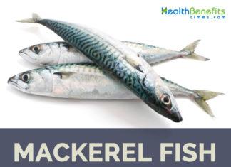 Mackerel fish health benefits and facts