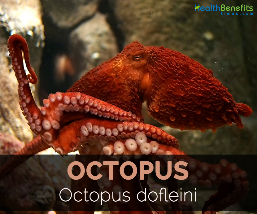 Octopus Facts, Health ...