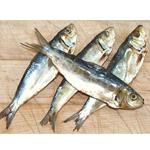 Philippine Dried Sardine