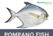 Pompano fish facts and nutritional info