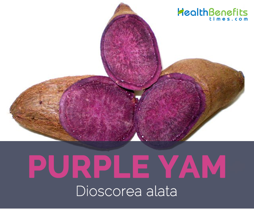 Purple yam facts and health benefits