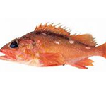 Rose thorn Rockfish