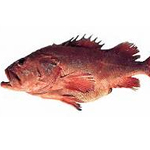 Shortraker Rockfish