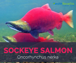 Sockeye salmon facts and health benefits