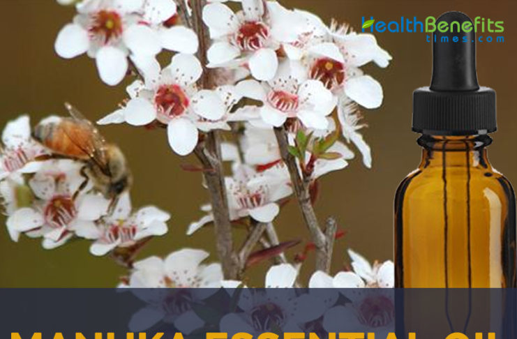 Manuka essential oil facts and benefits