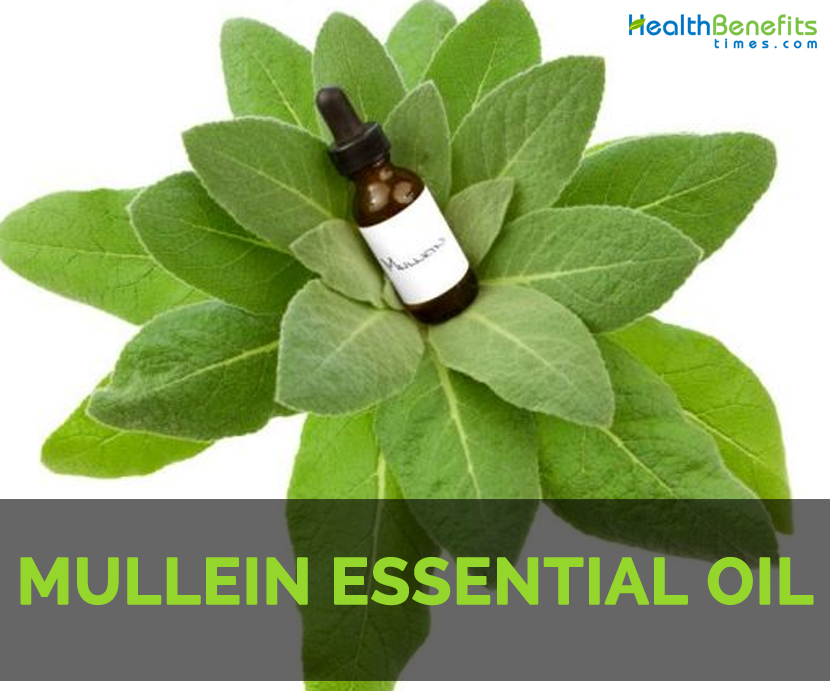 Mullein leaf side effects