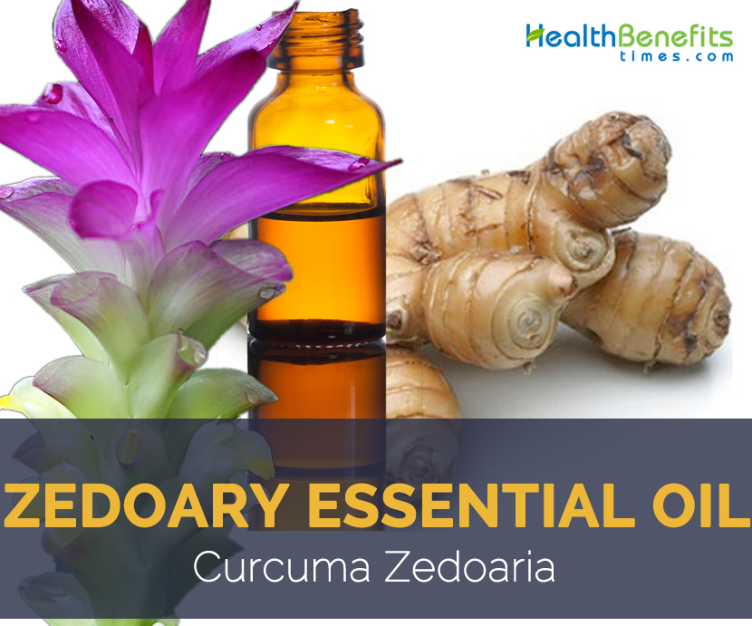 Zedoary essential oil facts and benefits